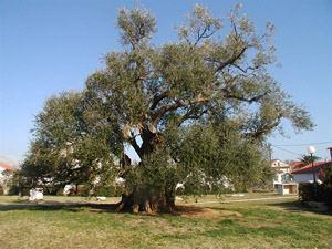 Splitsko-dalmatinska županija
